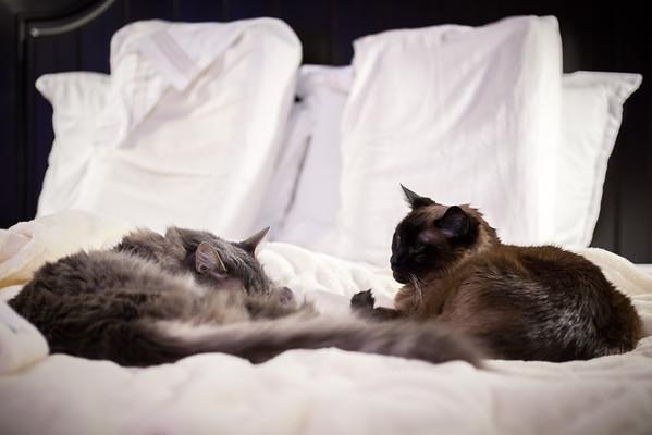 JANUARY - Meeko and Mushu on the blanket
