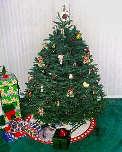 Meeko peeks under the tree