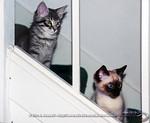 Meeko and I on the stairs