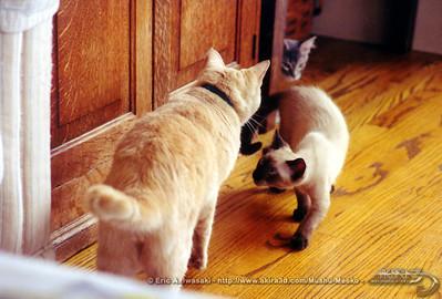 Mushu confronts Uncle Jean-Luc,