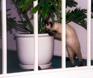 attacks an unsuspecting plant,
