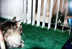 The stranger stares at Meeko,