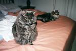 Bella and Meeko on bed