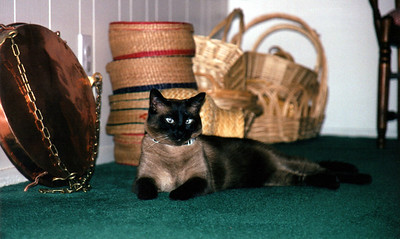 Resting by the baskets