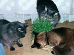 "Meeko says, ""Eat the grass!"""