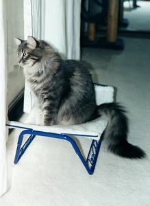 Meeko enjoys the hammock