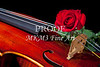 Red Rose Violin Viola