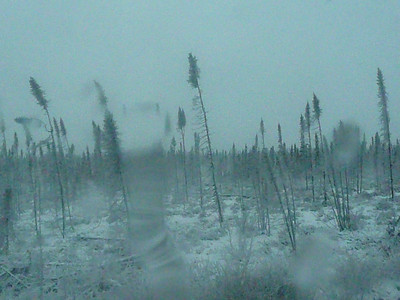 """Passing through the """"land of the sticks"""" - for hundreds and hundreds of miles...."""