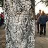 Cool tree bark