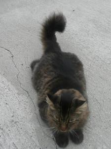 A Francois Coon cat.