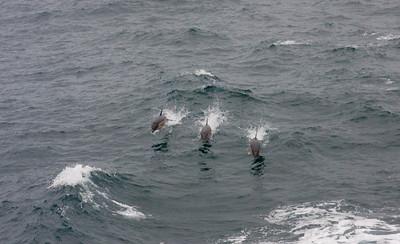 AtlanticAdven2010-3658