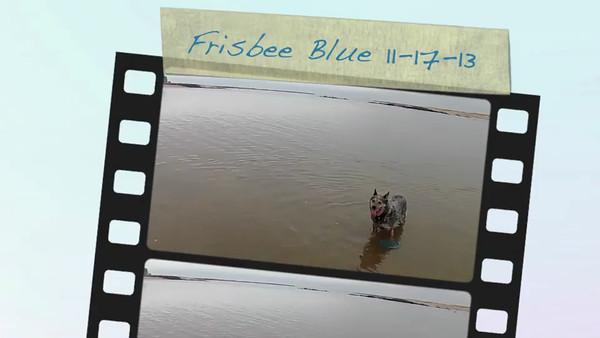 Blue Frisbee 11-17-13