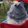 Dumb;edore's hat