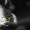 Rachel's 5 leaf clover