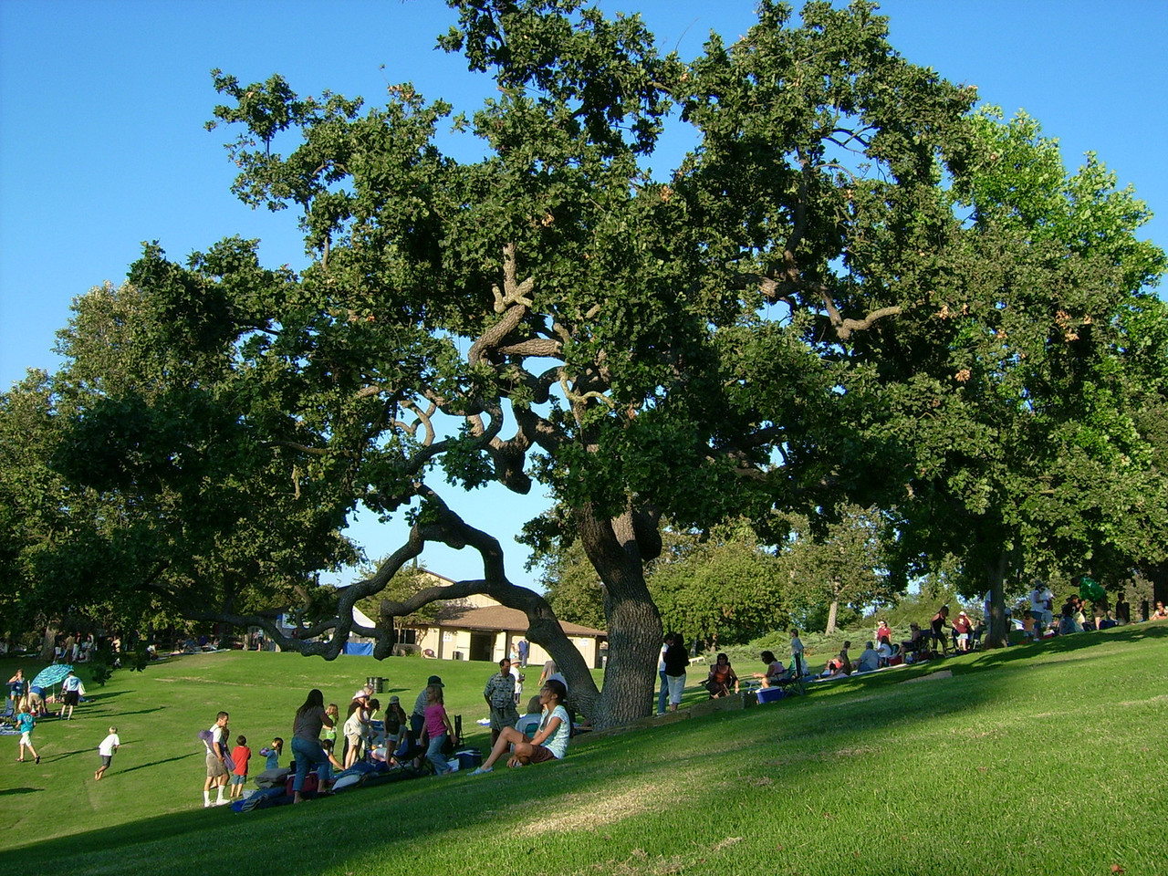 Folks gathered under the shade of the magnificient old oaks at Conejo Community Park for the concert.  The featured group was 'Tin Drum' a group of studio musicians for well known headliners, putting their own jam together for the afternoon.