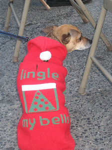 Daisy can't spell very well. Her owner and I played bells for Jingle Bells.