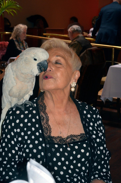 Pearl Clarke and parrot - Opening night party for Freddy Clarke's Wobbly World and his mother Pearl's birthday, at Maestro's Restaurant (formerly STARS).
