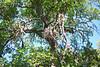 Tree outside cabin.
