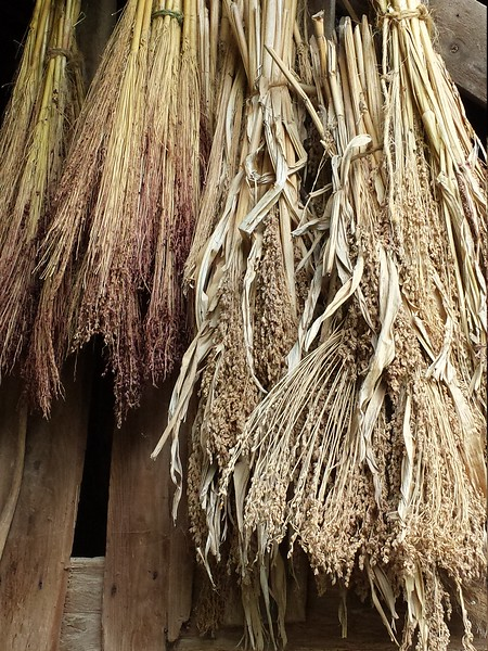 Drying Sorghum for brooms