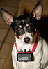 The musical dog.