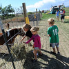 "Sophia Varga, left, sister, Ava, and brother, Ethan, of Broomfield, feed the animals at the Rock Creek Pumpkin Farm off Highway 287.<br /> For more photos of pumpkin patches, go to  <a href=""http://www.dailycamera.com"">http://www.dailycamera.com</a><br /> Cliff Grassmick / October 2, 2011"
