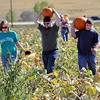 "Amanda Sicking, left, Justin Sicking and Brandon Morris, return from picking out the pumpkins they wanted at Rock Creek Pumpkin Farm.<br /> For more photos and a video  of pumpkin patches, go to  <a href=""http://www.dailycamera.com"">http://www.dailycamera.com</a><br /> Cliff Grassmick / October 2, 2011"