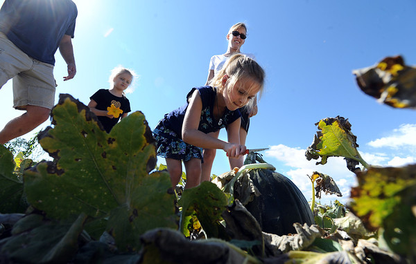 "Spencer Fritzler, 7, picks a green pumpkin for the family for a carving of a witch.<br /> For more photos of pumpkin patches, go to  <a href=""http://www.dailycamera.com"">http://www.dailycamera.com</a><br /> Cliff Grassmick / October 2, 2011"