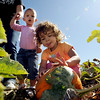 "Mallory Henry, 2, concentrates on checking out this pumpkin for her and her sister, Sophia,1, left, as Amber Bryde looks on at Rock Creek Pumpkin Farm.<br /> For a video and more photos of pumpkin picking, go to  <a href=""http://www.dailycamera.com"">http://www.dailycamera.com</a>.<br /> Cliff Grassmick / October 6, 2011"