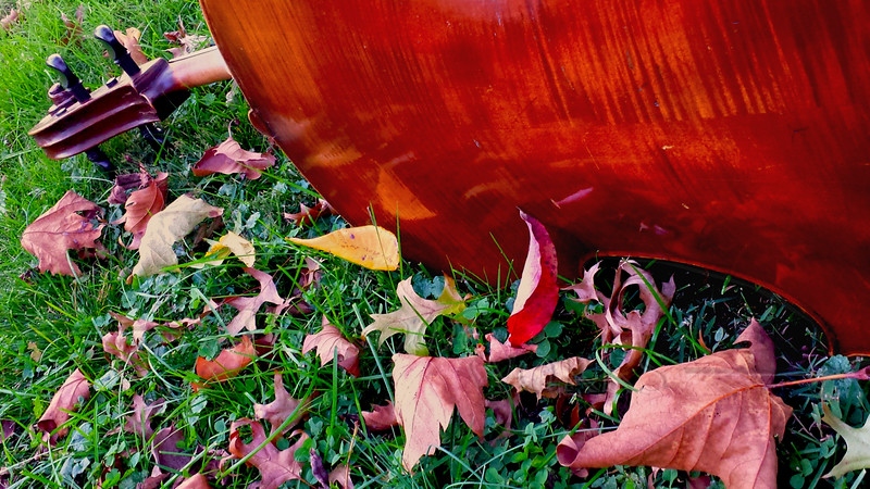 Cello outdoors in fall