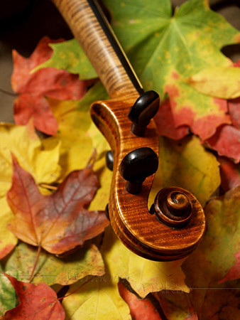 Tiger Maple Violin Scroll with Autumn Maple Leaves