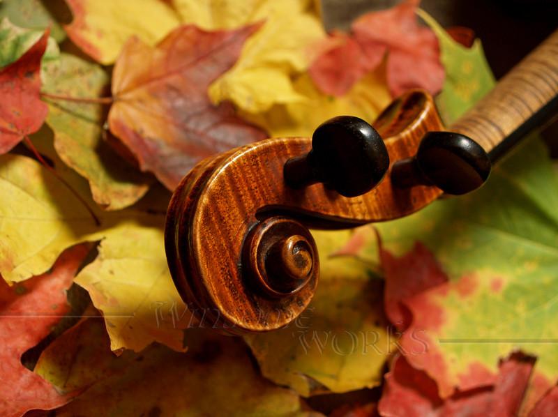 Maple on Maple- Fiddle Scroll