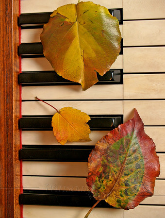 Autumn Leaf Threesome on Old Piano