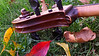 Cello scroll,  outdoors in autumn