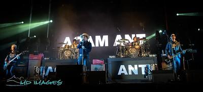 Adam Ant-2