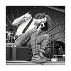 David Shaw- The Revivalists @ Gentilly Stage (Fri 4/29/16)