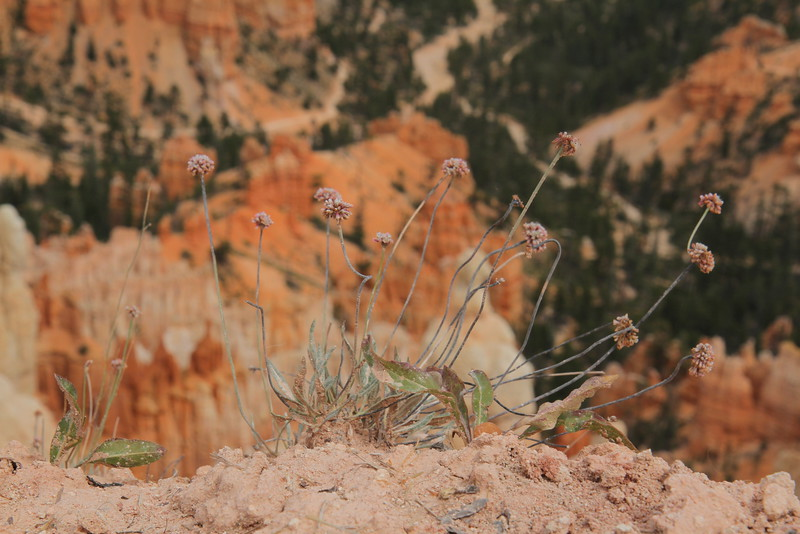 Bryce Canyon, which is in Arizona or Utah.