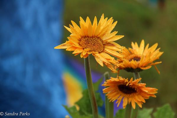 Camp flowers
