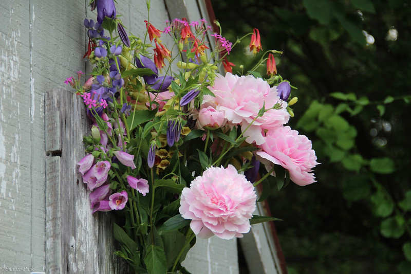 FLowers on the old outhouse.