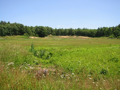 cragberry bog near Camp