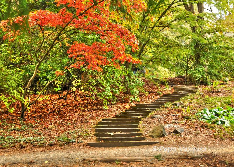 Washington Park Arboretum 10/15