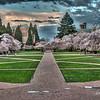 Cherry Blosson The Quad UW 3/15