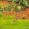 Bellevue Botanical Garden 10/15