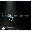Samedi 9 novembre 2013, Metropop Festival, Lausanne: Yodelice en concert.