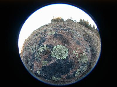 lichen-wonderland29