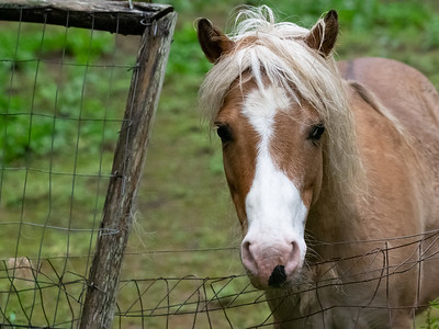 Butterscotch, the plate-licking pony.