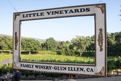 2019_07 19_LittleVineyards-009