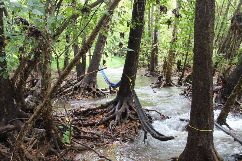 Hammocks in the stream