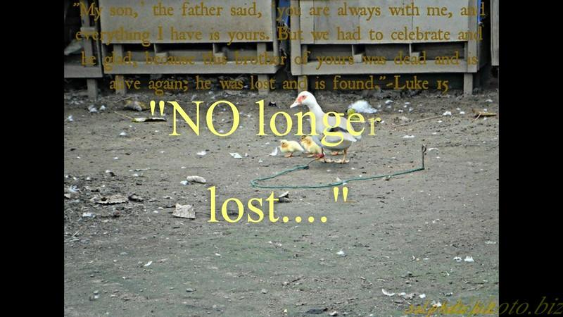 """""""NO longer lost...""""<br /> <a href=""""https://youtu.be/VAvQZRomMXQ"""">https://youtu.be/VAvQZRomMXQ</a><br /> <br /> <a href=""""https://creativemusicartsy.wordpress.com/2016/07/14/music-parody-no-longer-lost/"""">https://creativemusicartsy.wordpress.com/2016/07/14/music-parody-no-longer-lost/</a><br /> <br /> <a href=""""http://salphotobiz.smugmug.com/Animals/Wildlife-around/20933493_P8fXK4#!i=3605402338&k=5x3tWHL&lb=1&s=A"""">http://salphotobiz.smugmug.com/Animals/Wildlife-around/20933493_P8fXK4#!i=3605402338&k=5x3tWHL&lb=1&s=A</a>"""