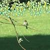 "Karaoke-""Great are You Lord"" (originally by All Sons & Daughters) by Crazy lil' Sal<br /> <a href=""https://youtu.be/y9I4cMFTHK8"">https://youtu.be/y9I4cMFTHK8</a><br /> <br /> <a href=""https://creativemusicartsy.wordpress.com/2018/10/17/music-karaoke-great-are-you-lord-originally-by-all-sons-daughters-by-crazy-lil-sal/"">https://creativemusicartsy.wordpress.com/2018/10/17/music-karaoke-great-are-you-lord-originally-by-all-sons-daughters-by-crazy-lil-sal/</a><br /> <br /> #creativemusicartsy #crazylilsal<br /> <a href=""https://www.instagram.com/creativemusicartsy/"">https://www.instagram.com/creativemusicartsy/</a><br /> <br /> <a href=""https://salphotobiz.smugmug.com/Animals/Wildlife-around/i-z3SkP6D?fbclid=IwAR3Uk4qtSZCjo9ZjpDkumDU3IJ6kzKMdmjXq4_LbGv6zlh0sKMSb5KuVylk"">https://salphotobiz.smugmug.com/Animals/Wildlife-around/i-z3SkP6D?fbclid=IwAR3Uk4qtSZCjo9ZjpDkumDU3IJ6kzKMdmjXq4_LbGv6zlh0sKMSb5KuVylk</a>"