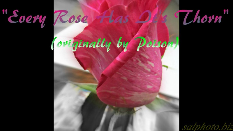"""Every Rose Has it's Thorn"" (originally by Poison) by Crazy lil' Sal<br /> <a href=""https://youtu.be/B5T2gIEh4NY"">https://youtu.be/B5T2gIEh4NY</a><br /> <br /> <a href=""https://creativemusicartsy.wordpress.com/2017/01/19/music-karaoke-every-rose-has-its-thorn-originally-by-poison-by-crazy-lil-sal/"">https://creativemusicartsy.wordpress.com/2017/01/19/music-karaoke-every-rose-has-its-thorn-originally-by-poison-by-crazy-lil-sal/</a><br /> <br /> <br /> <a href=""https://salphotobiz.smugmug.com/Flowers/Various-Flowers/i-sqLnnhT"">https://salphotobiz.smugmug.com/Flowers/Various-Flowers/i-sqLnnhT</a>"